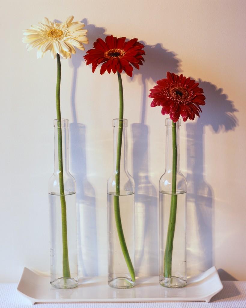 Gerbera Daisies in Vases