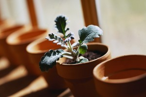 Potted Plant Sitting by Window