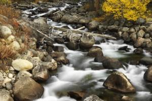 Fall Color Along Stream Bank